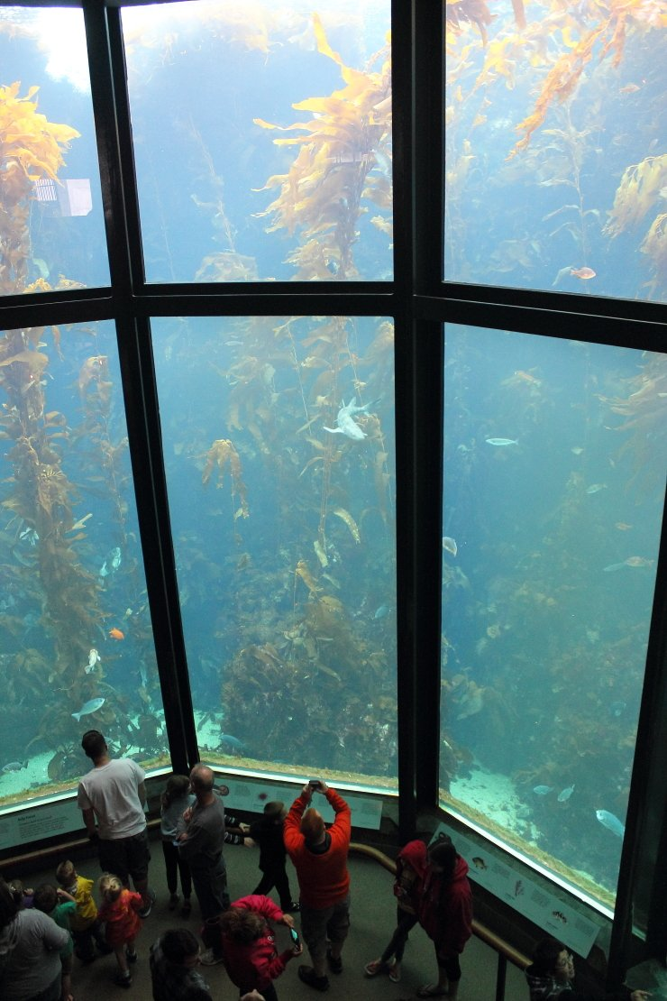 The Monterey Bay Aquarium in Monterey is a must see for families visiting the area.