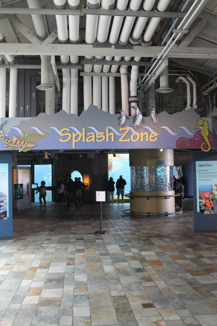 The perfect place to bring young children - Splash Zone at the Monterey Bay Aquarium